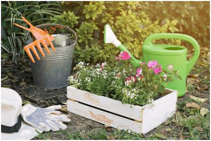 Idei amenajare grădină