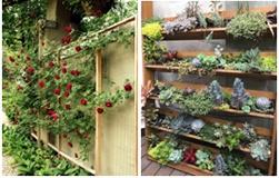 Vegetația un element cheie al grădinii tale