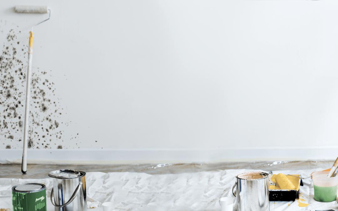 Mucegai în locuință: cum scapi de el în 2 zile?