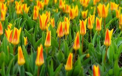 Amenajare grădină cu flori