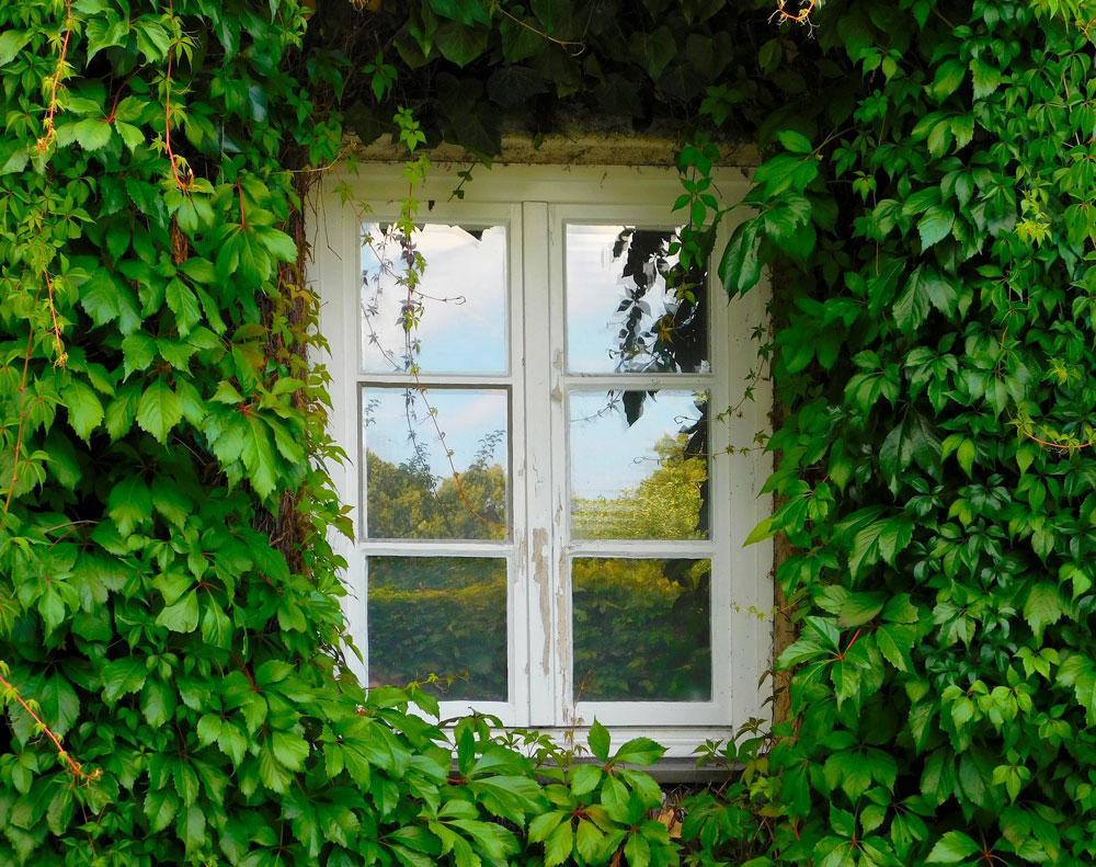 vopsesc ferestre lemn